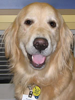 Photo of Miss Bailey Pet Therapy Dog.
