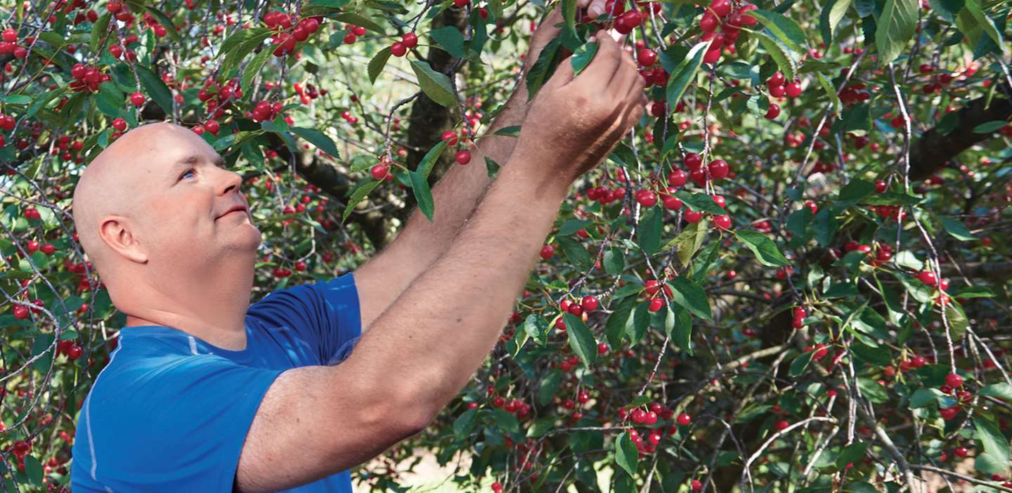 Image of Joe inspecting a cherry tree on his farm.