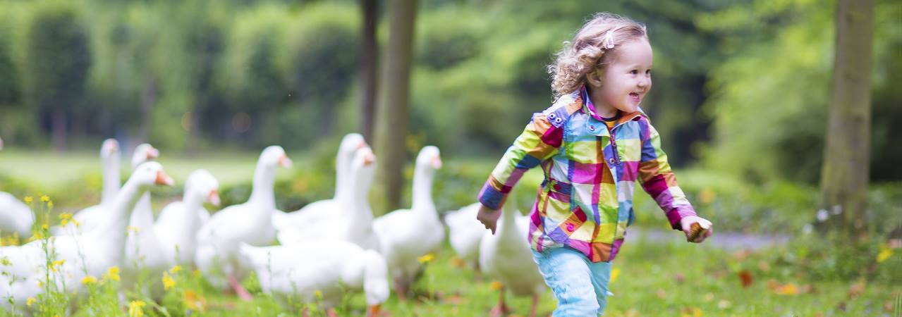 Photo of young girl running with ducks.